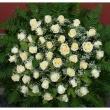 Armeria Virágbolt