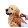 Sanovet-Dent Állatorvosi és Állatfogászati Rendelő