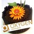 Oxygen Cukrászműhely és Kávézó
