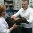SOS Állatorvosi Rendelő - Nánási út