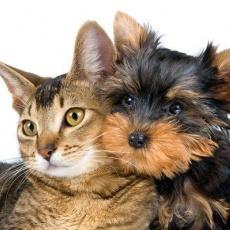 Békás Állateledel és Kutyakozmetika