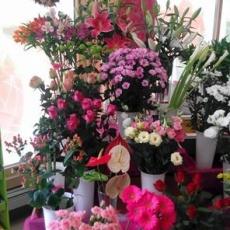 Százszorszép Virág-Ajándék - Csillag Center