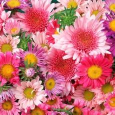 Judit Virágüzlet