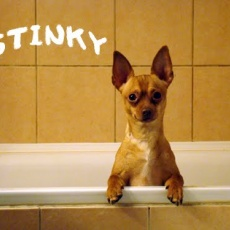 Blöki Borbély Kutyakozmetika